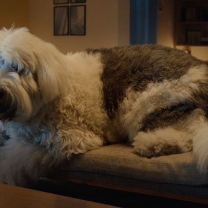 A giant dog grabs attention in this Skoda ad, but is it barking up the wrong tree?