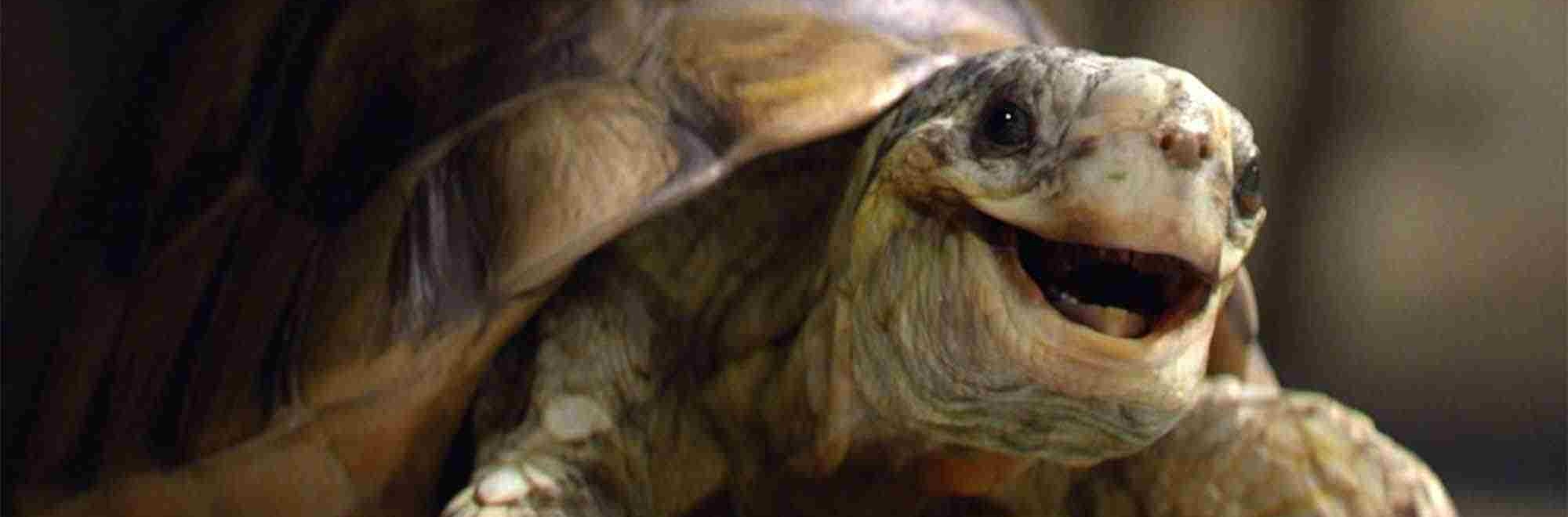 Atomic and Homebase launch new Easter campaign starring Gary the tortoise