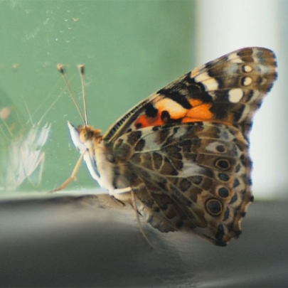 The Guardian uses a butterfly to powerful effect in its TV ad 'Change is possible. Hope is power'